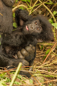 Posing baby
