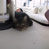 Cruising Grenada: Carriacou<br /> Life of a ship's cat(ain) is not always easy, now I need to rest.