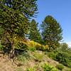 Botanical Garden Carona