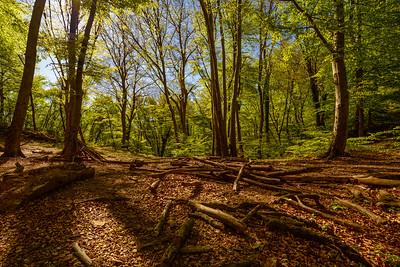 Forest San Salvatore