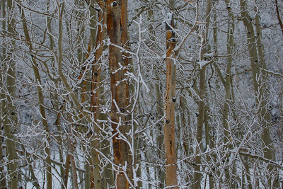 Dixie National Forest Winter Abstract