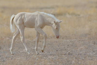 A Newborn Foal