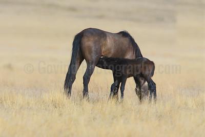 Feeding Foal