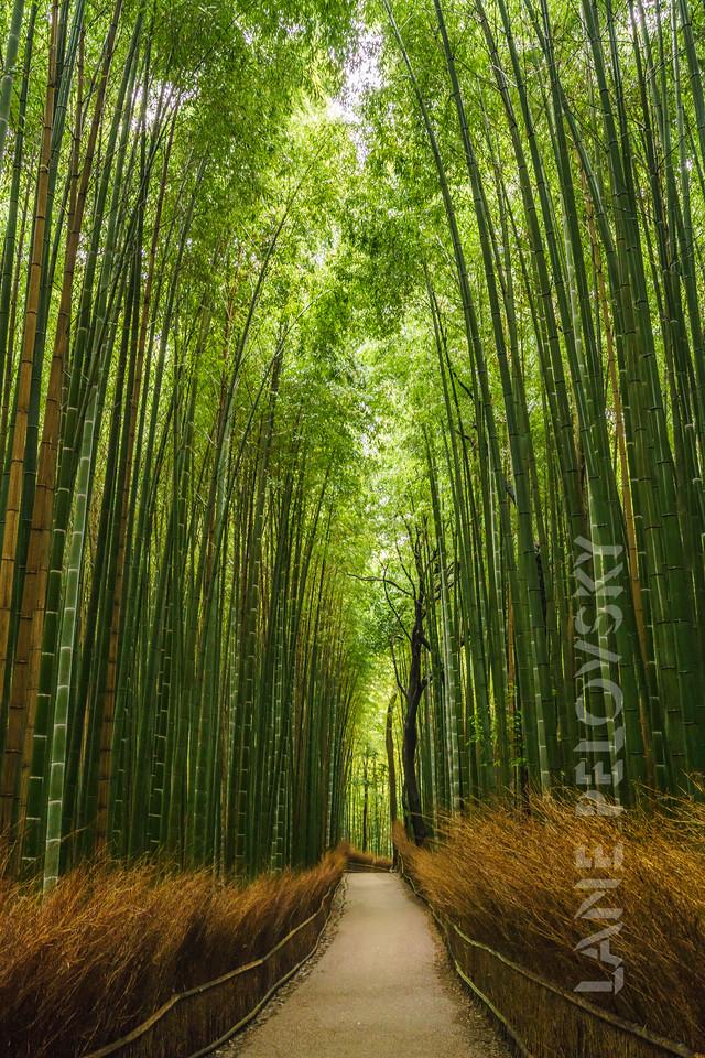 Arashiyama Bamboo Grove