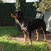 Kajo in giardino (1)
