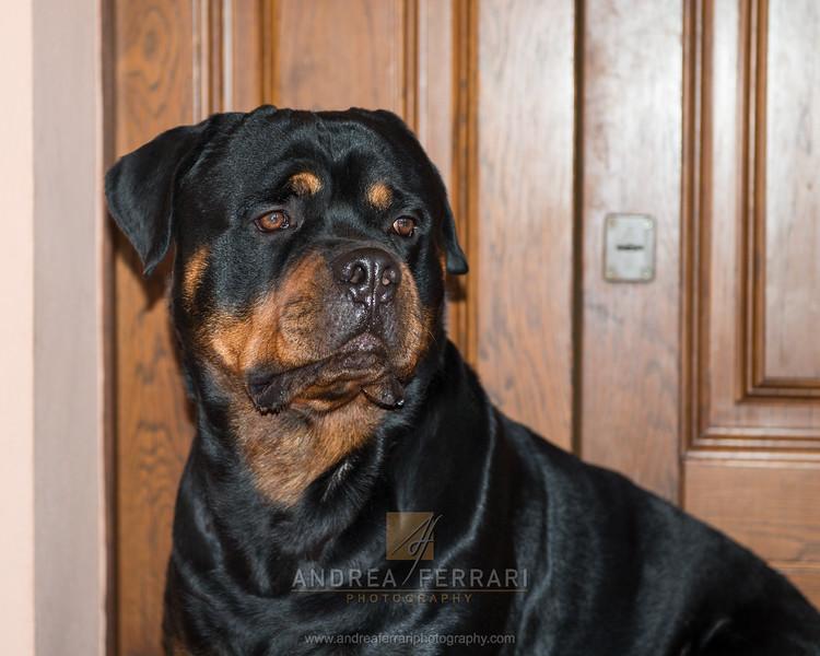 Kajo di guardia alla porta (1)