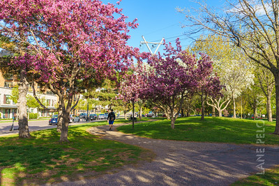 Father Hennepin Park - Spring 3