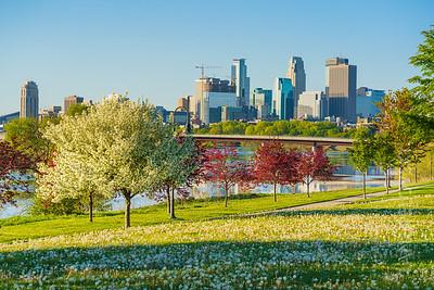 Spring in Minneapolis - Foliage