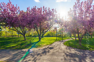 Father Hennepin Park - Spring 5