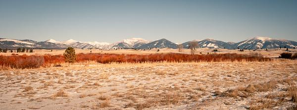 Patched Grassland
