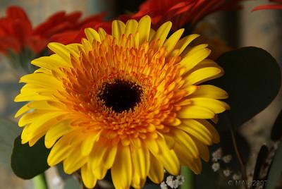 Flores para Esther - Flowers for Esther