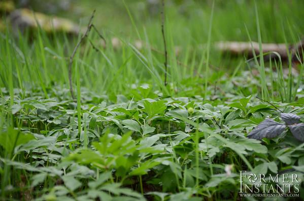 Grass Level