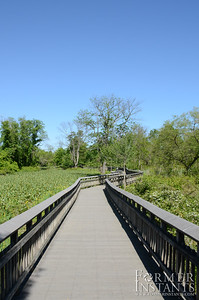 Boardwalk in the Park