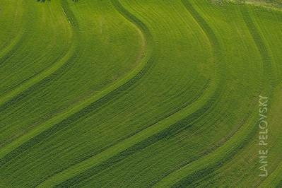 Field Terraces