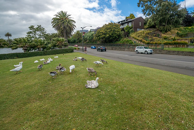 Wanganui NZ
