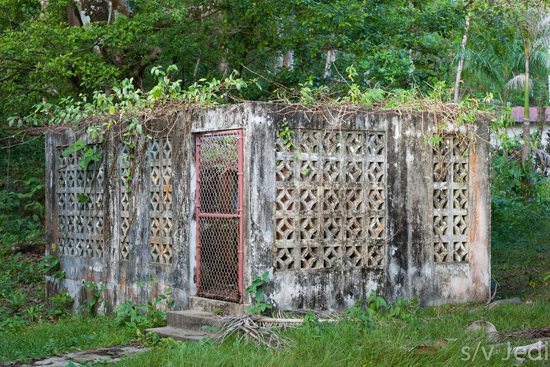 Overgrown building in jungle.
