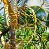 New leaf on palm tree - New leaf forming on a palm tree in bloom in the Panamanian Rainforest