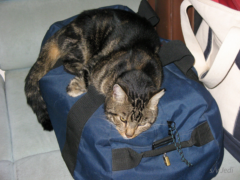IMG_1456.JPG<br /> Christmas trip to Holland.<br /> Chippy doesn't want us to go...