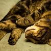 Sleeping ;-)