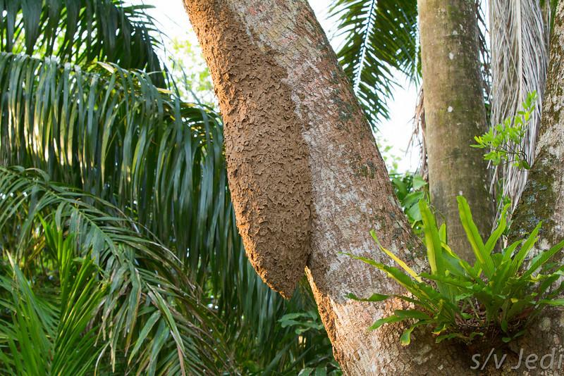 Ants nest.