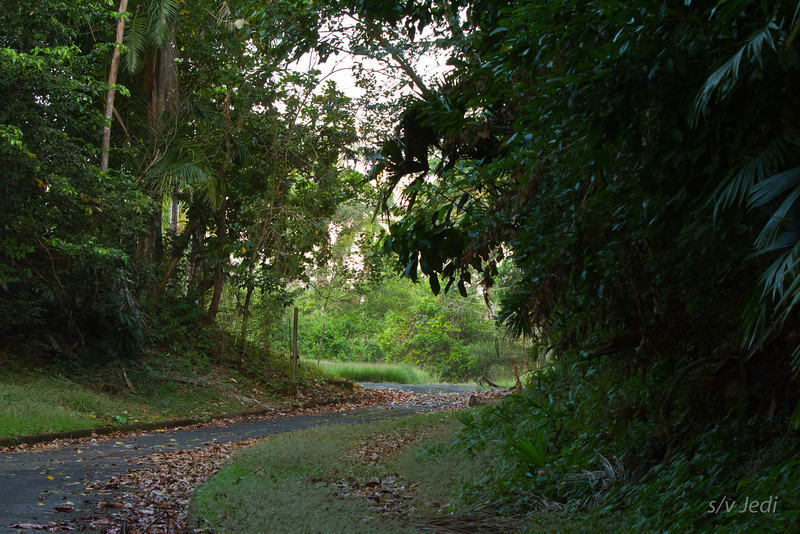 Walking along the edge of the jungle<br /> This road leads through the jungle to a remote part of Fort Sherman.
