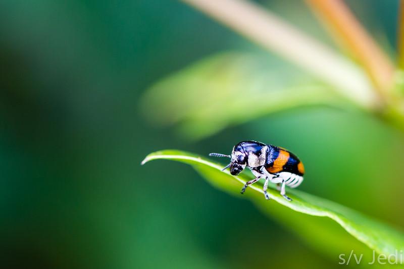 Unidentified beetle