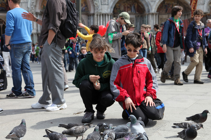 Traditional pigeon feeding, in San Marco Piazza