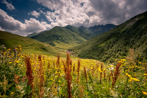 Meadows of Svaneti