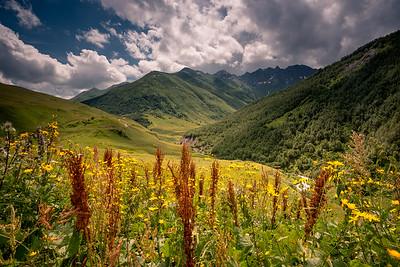 Meadows of Svaneti