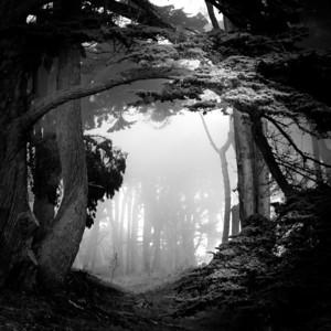 Eye Of Woods