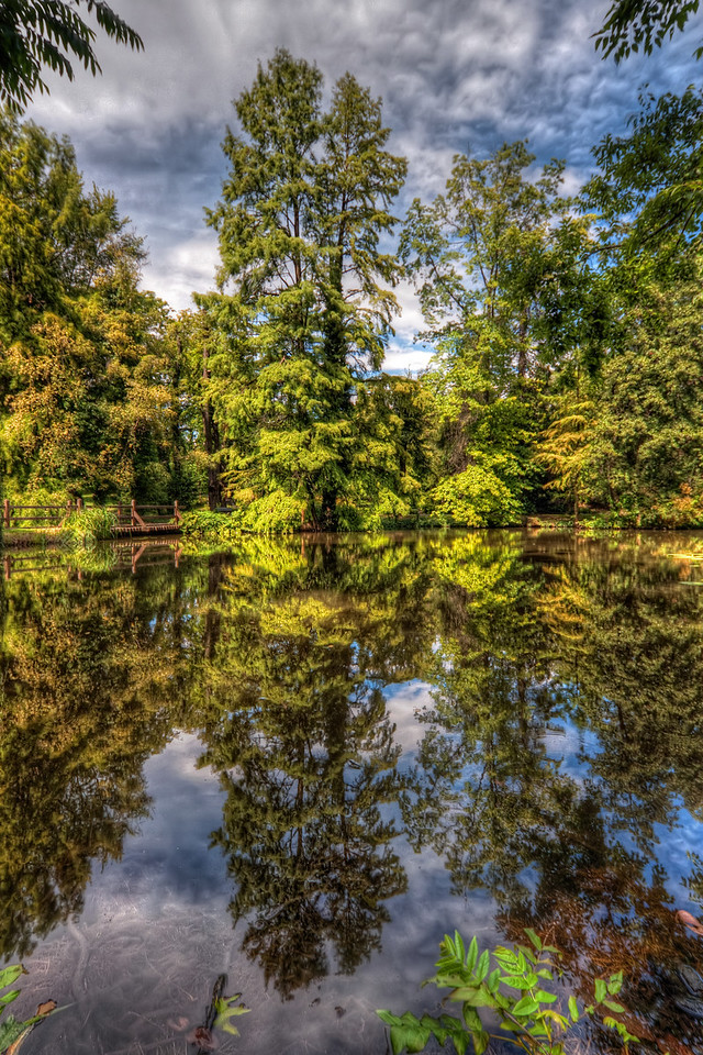 Nature's Mirror