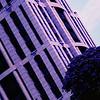 Nikon FT3 - Lomochrome Purple XR 100-400, 35mm Colour Film @ ISO400