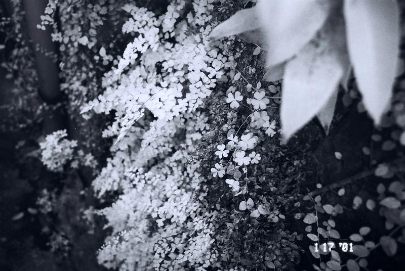 2015/07/12 - Infra-fern