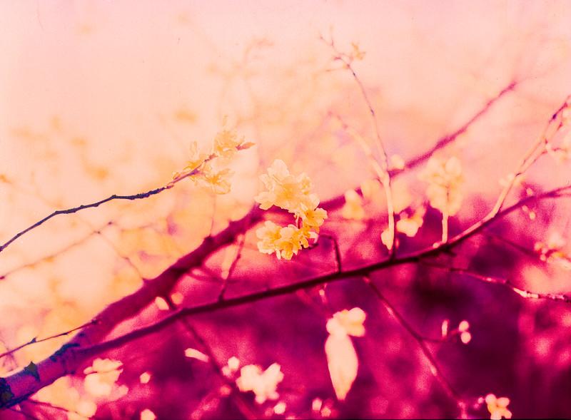Blossom blaze