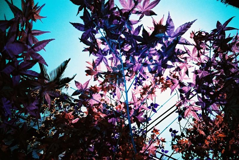 2015/06/24 – Purple Flare