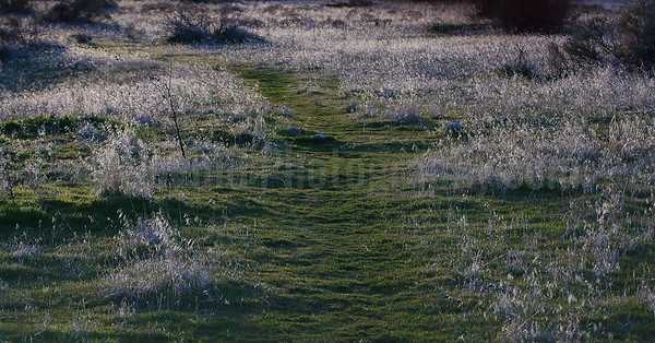 Backlit Early Spring Grass in Antelope Island SP
