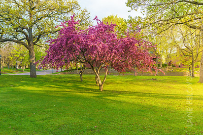 Irvine Park - Tree