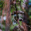 Scene from Skidaway island - Fall scene with Pine cones and dry brown leaves, empty branches