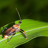 Assassin Bug - This 1 inch long Assassin bug will kill other insects.