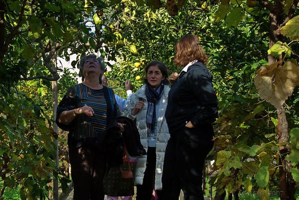 Esther, Rosaria y Mariella entre limoneros (lemon trees).