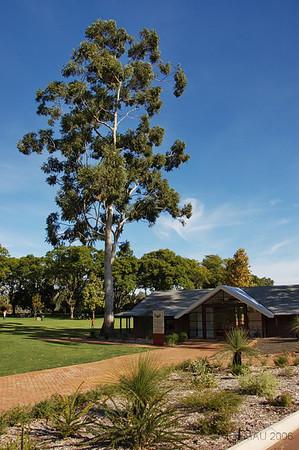 Este eucaliptos tenía una historia, pero como hace tres años que estuve allí ya no me acuerdo.<br /> <br /> There was some story behind this eucalyptus, but as I was there three years ago I don't remember it.