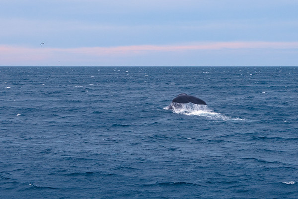 Whale Watching (31.01.2017)