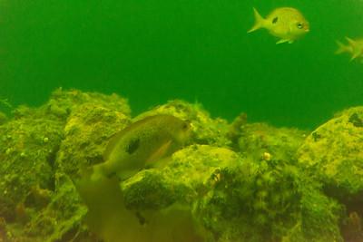 Underwater Observatory Center
