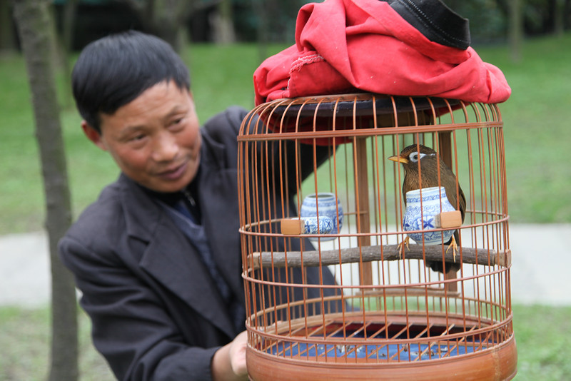 "Apparently, he (and a group of others outside the picture) take their birds for a ""walk"" every Sunday. He was eager to have me take a picture of his bird. Dujiangyan."