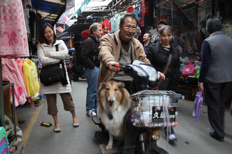 Friendly guy with friendly dog who was clearly at home riding on the scooter with his master. At a market in Dujiangyan.