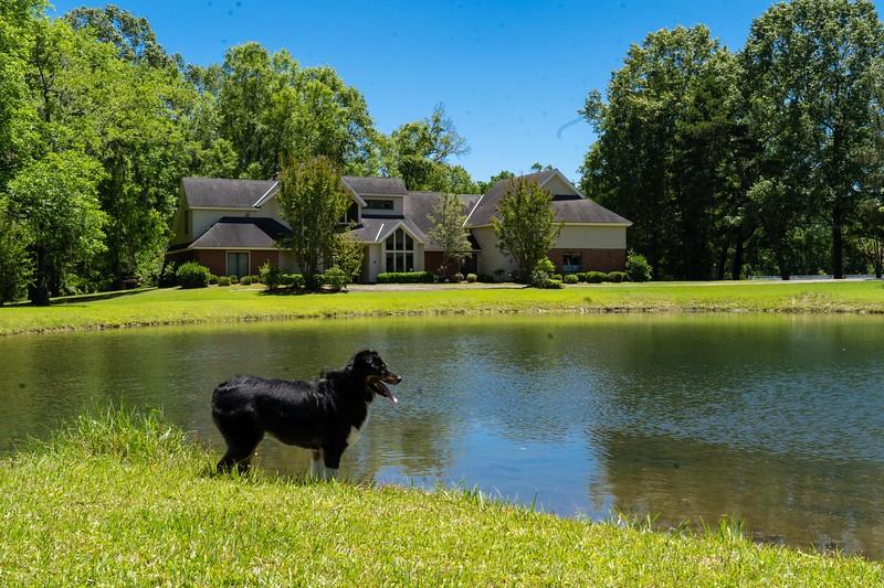 Athena & Tai's pond, Montgomery, AL
