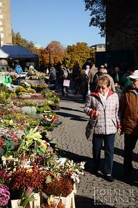 Flower Market Browsing