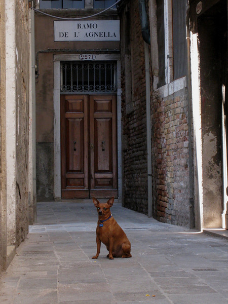 Venice & Paris, dogs.  <br /> Greece & Turkey, cats.