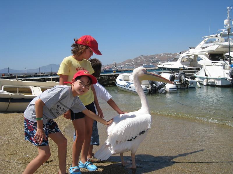 A (nearly) tame pelican in Mykonos, Greece