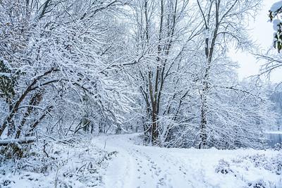 Roseville Snowfall